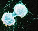 Доклад о белке лечение 4 класс